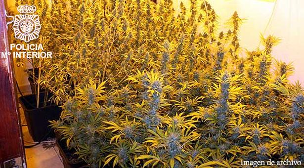 Dos detenidos por plantar marihuana en un piso ocupado en Puente de Vallecas