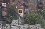 Se desploma un árbol sobre la boca de metro de Congosto