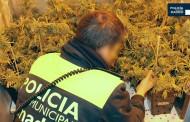 La policía desmantela una plantación de marihuana oculta en un almacén de pintura en Vallecas