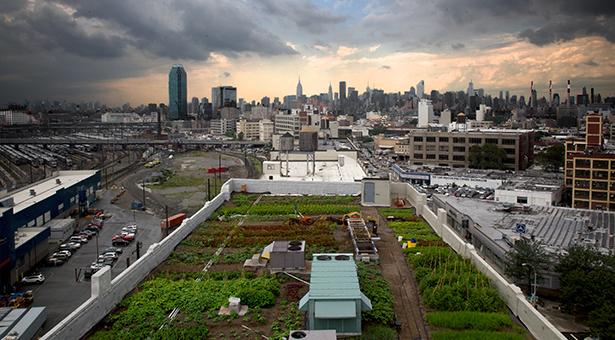 Recuperación de zonas verdes en urbes