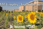 7.000 Girasoles del Ensanche de Vallecas - Cosechando barrio