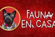Fauna en Casa - Proyecto en pro de la adopción de mascotas creado en Vallecas