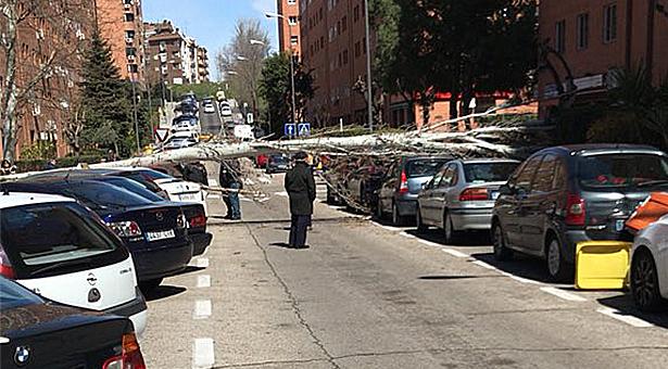 Vuelven a caerse árboles en Vallecas por el fuerte temporal y la falta de mantenimiento