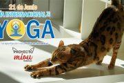 La AAVV Pau del Ensanche de Vallecas celebra el Día Internacional del Yoga